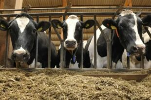 Как построить помещение для домашнего скота