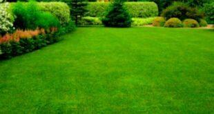Что такое жидкий газон и как купить газон в Воронеже или в любом другом городе